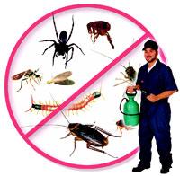 Стормбрингер ООД - ефективна борба с насекоми и гризачи